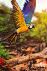 320x568 Colorful Parrot 4k