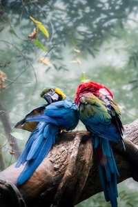 1080x2160 Colorful Parrots Couple