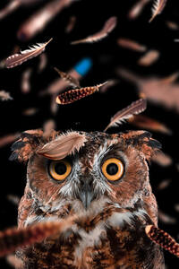 800x1280 Curious Owl