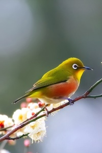 Cute Bird Close Up