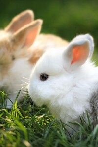 1080x2280 Cute Bunnies