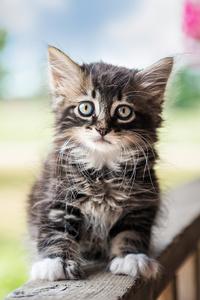 240x400 Cute Cat 4k