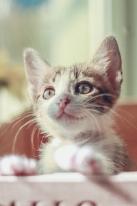 1080x2160 Cute Cat Kitty