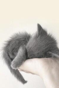 320x568 Cute Cat