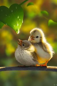 Cute Chicks 4k