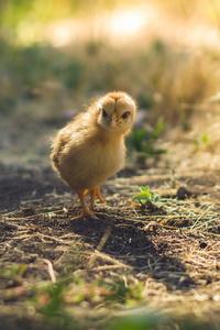 2160x3840 Cute Chicks