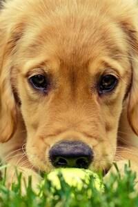 320x480 Cute Dog