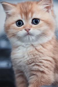 1080x2160 Cute Kitten 4k
