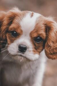 1125x2436 Cute Puppy