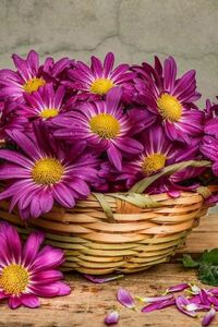 320x480 Daisies In A Basket