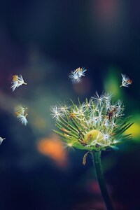 Dandelion Flies Flowers