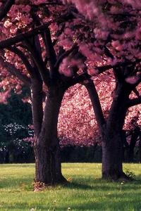 Dandelion Flowers Spring