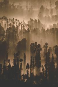 Dark Forest Trees Nature Scenery