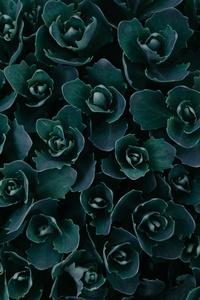 Dark Green Plants Abstract 5k