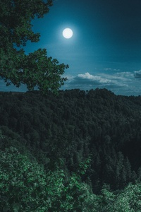 Dark Night Forest View 5k