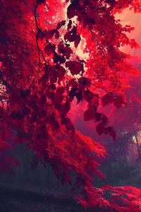 Dark Red Autumn Forest