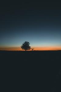 Daybreak Tree Landscape 5k