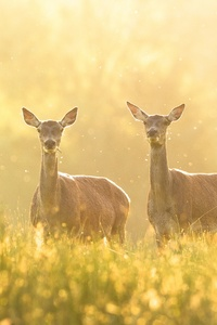 1080x2280 Deer Grass 4k