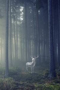 Deer Illustration 4k