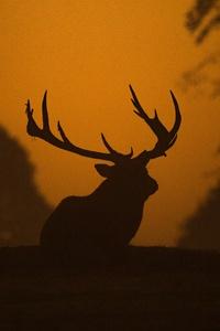 Deer Silhouette 5k