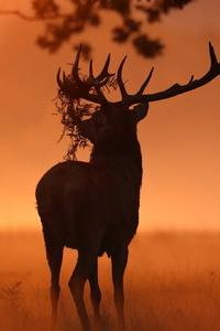 Deer Sunlight Nature
