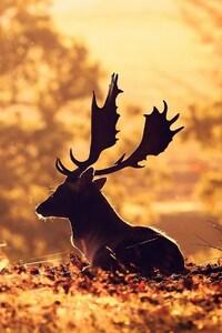 320x568 Deer