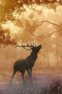 Deer Wild Nature Forest 4k