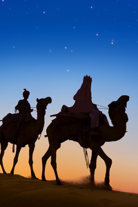 Desert Camels Evening Silhouette