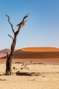 240x400 Desert Sand Dune Dunes 5k