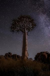 240x400 Desert Trees Milky Way Night 4k