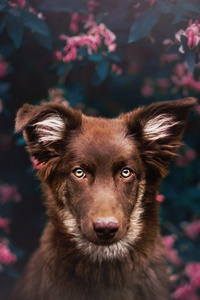 1080x2280 Dog Attractive Eyes