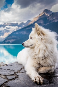 480x800 Dog Lake Louise