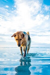 Dog On Lake