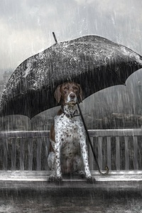 480x854 Dog Rain Umbrella Photo Manipulation
