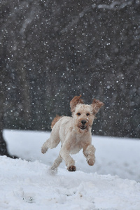 1440x2560 Dog Running In A Snow