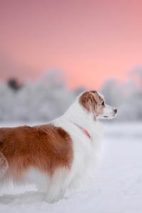 320x568 Dog Snow 4k