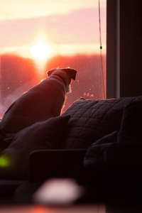 480x854 Dog Watching Sunset 5k