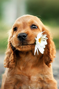 Dog With Flower In Mouth