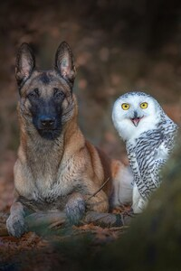 1080x1920 Dog With Owl