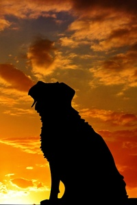 1440x2960 Dogs Silhouette 4k