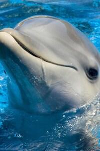 Dolphin Cute