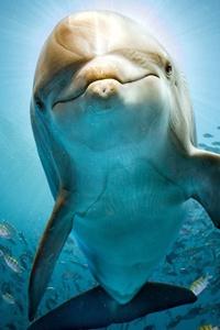 320x568 Dolphin Hd
