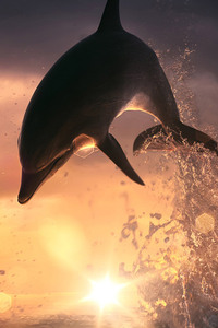 1080x2280 Dolphin Jump Out Of Ocean
