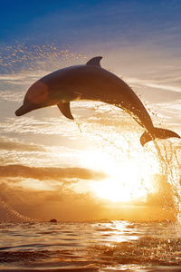 320x480 Dolphin Jumping Out Of Water