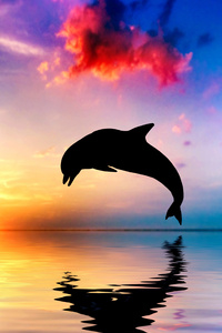 1080x2280 Dolphin Jumping Out Of Water Sunset View 4k