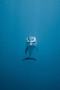 1125x2436 Dolphin Underwater 5k