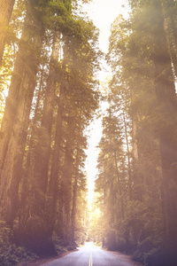320x480 Driving Through Red Woods 5k