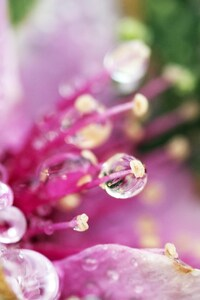 320x480 Droplets Flower