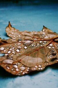 1440x2560 Drops on Leaf
