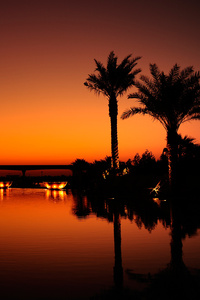 320x480 Dubai Palm Trees Sunset Reflection